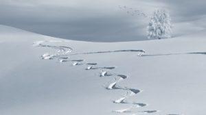 sneeuwafdruk van snowboarder